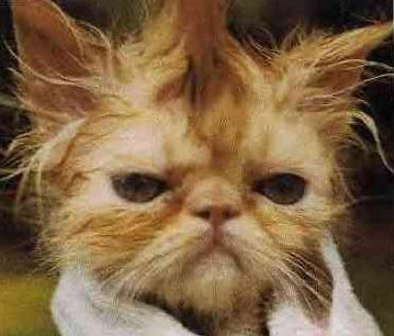"The image ""http://www.hereinreality.com/funnystuff/animalpics/showercat.jpg"" cannot be displayed, because it contains errors."