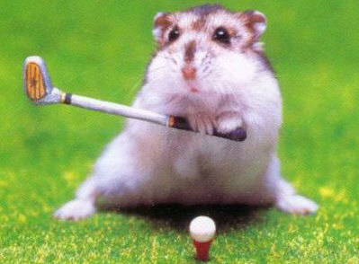 Hamster Golfer